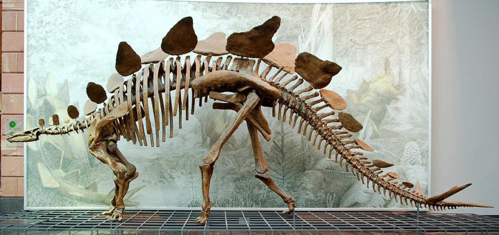 1200px-Stegosaurus_Senckenberg