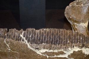 Edmontosaurus-2